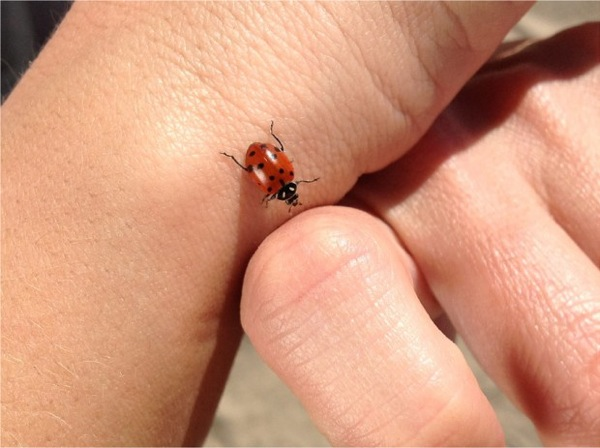Ladybug photo taken with new ipad